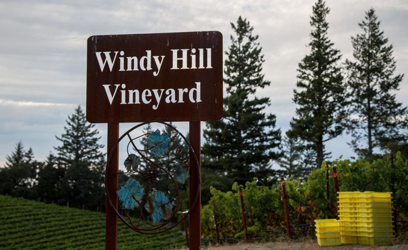 Windy Hill Vineyard
